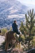 A cheval en Cévennes
