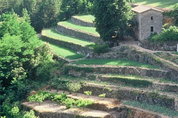 The Cevennes and terrace cultivation