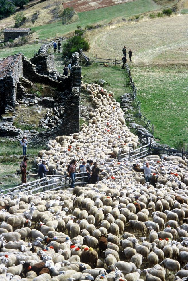 Transhumance in the Cévennes